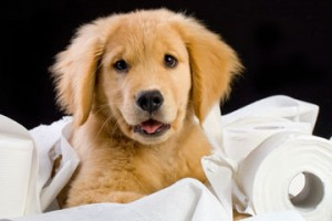 Pet Odor & Urine Cleaning In Sault Ste. Marie and all of Chippewa County MI